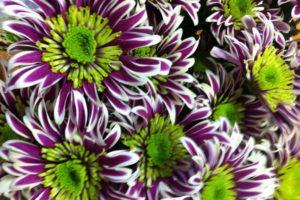 цветочные букеты 24 часа