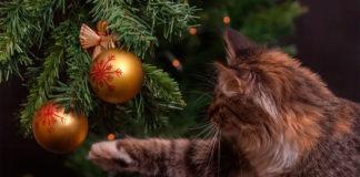 елка и кот